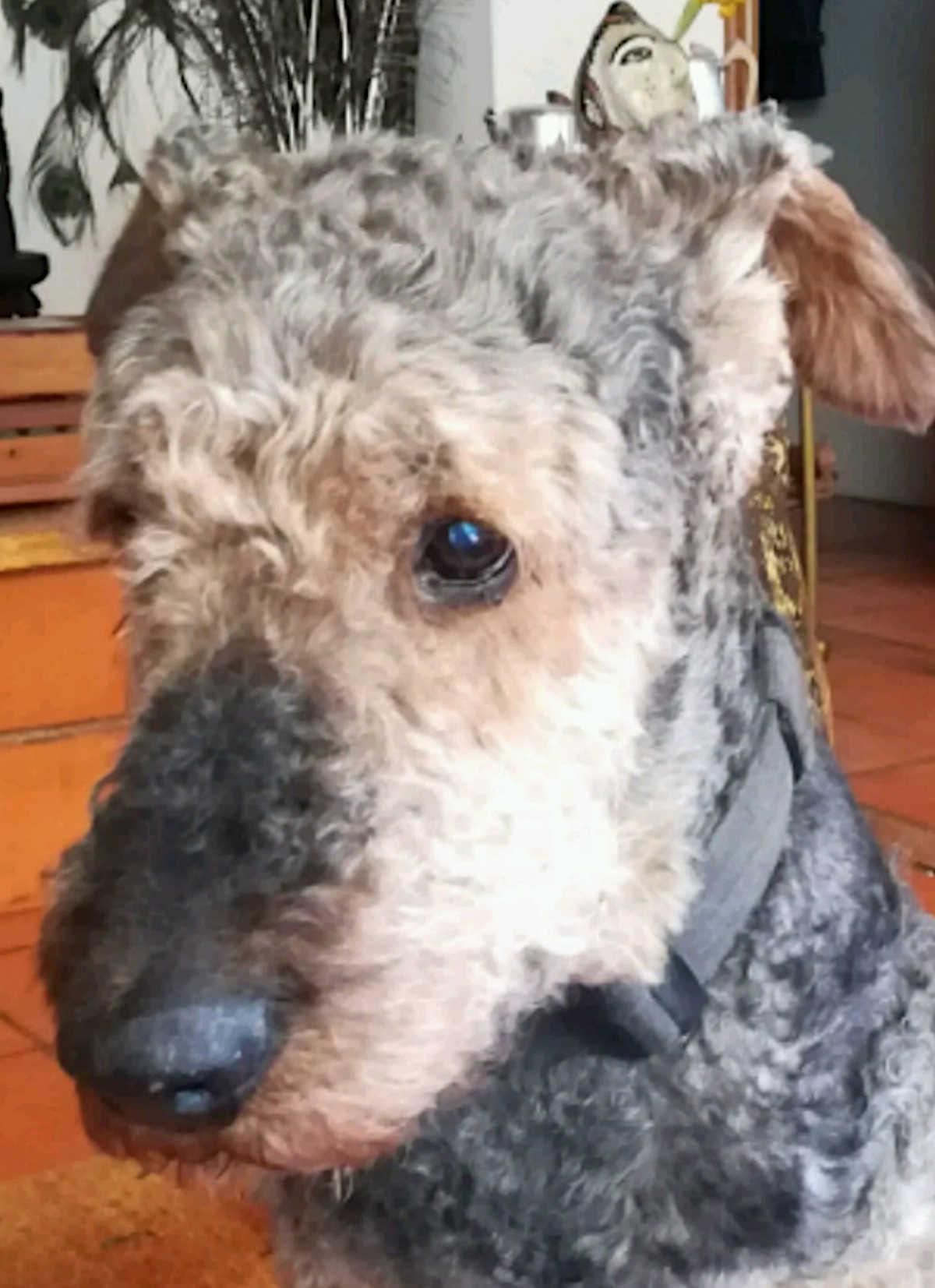De cans: divagacións e contradicións (I)